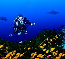 Diver over colorful Reef, Ponto  by Fiona Ayerst