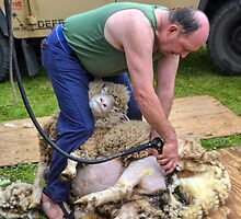 Sheep Shearer at Stockland Fair, Devon.uk by lynn carter
