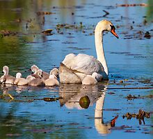 Maternal Reflection  by James Marvin Phelps