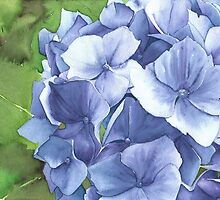 Blue Hydrangea flowers - Aquamarkers by Gee Massam
