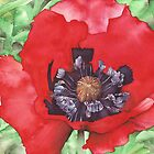 Red Poppy flower - Aquamarkers by Gee Massam