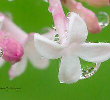 Lilac Blossom Macro by Yannik Hay