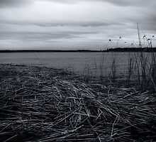 reed trail by gedts