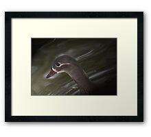 Female Mandarin Duck Framed Print