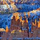 Light on Bryce Canyon  by Harry Oldmeadow