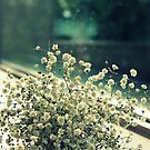 Baby's Breath by LaurelMuldowney