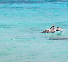 Pelican- Bonaire, Dutch Antilles by samanthaleebee