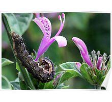 Beautiful Caterpillar (2) Poster