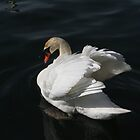 Beautiful Swan by Marie Van Schie