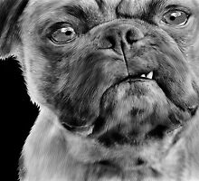 Smug Pug - Grumpy Dog by Doreen Erhardt