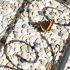 Butterfly by FontaineN
