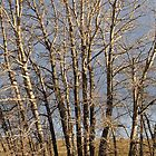 Trees by FontaineN