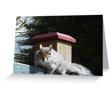 SQUIRREL SEARCHING FOR NUTS Greeting Card