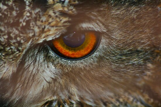 My Eye is on You by partridge