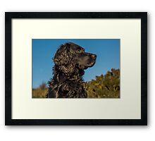 Animal, Dog, Cocker Spaniel, Black Framed Print