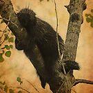 Porcupine by lumiwa