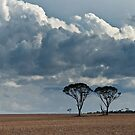 Two Trees by Werner Padarin