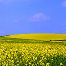 The Yellow Fields of Home by mikebov