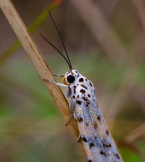 Moth Macro by GayeL Art