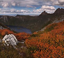Carpet of Fagus - Plateau Creek Cradle Mountain by Mark Shean