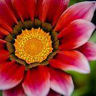 Fleur 1 by Richard Fortier