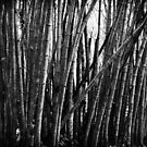 Bamboo Forest by Pandrot