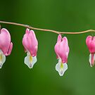 Bleeding Hearts by Zach Pezzillo