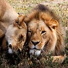 Open affection  2  -   ( Lion – Panthera leo )  Lake Nadutu Southern Serengeti  Tanzania by john  Lenagan