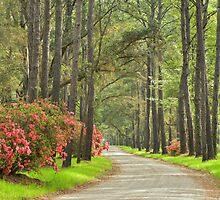 Plantation Road by JHRphotoART