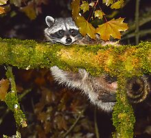 Hang in there 2 by Randy Giesbrecht