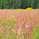 Colorful Field by ©Dawne M. Dunton