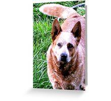 Dallas..... Prince Among Dogs Greeting Card
