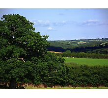 Devon Summer Photographic Print