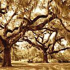 The Mighty Oaks by ©Dawne M. Dunton
