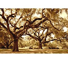 The Mighty Oaks Photographic Print