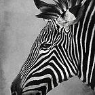 Zebra Portrait by CarolM
