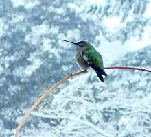 HUMMINGBIRD IN A SNOWSTORM by Doria Fochi