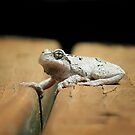 Gray Tree Frog by Sharon Woerner