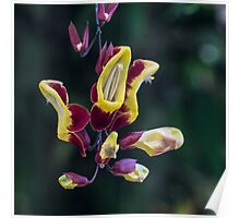 Red and Yellow Flower Vine Poster