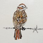 sparrow on barbed wire by miriamjones
