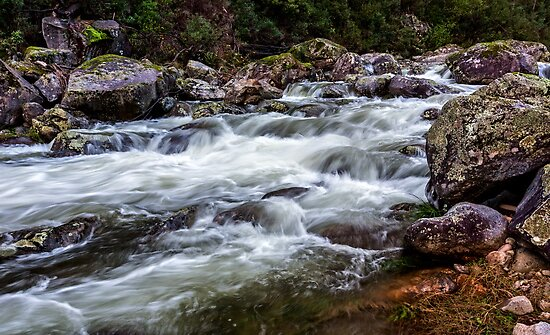 Trickle to a Torrent by Mark  Lucey