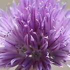 Chive Flower by wraysburyade