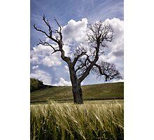 Dead Tree Dancing In A Cornfield Photographic Print