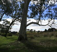 Vistas at every corner,Clare Valley,S.A. by elphonline
