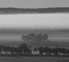 Misty mornings... by Sonya Hennessy