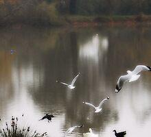 Taking Flight by Lozzar Landscape
