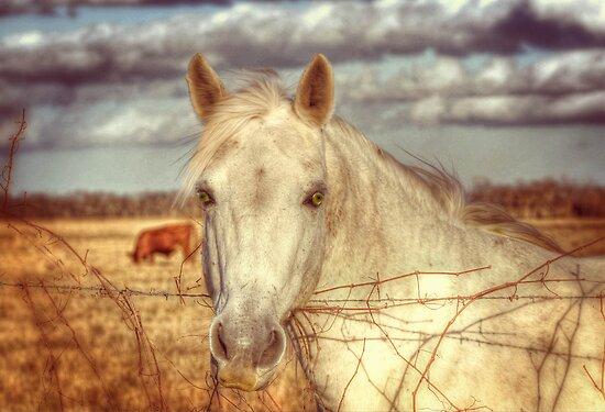 White Horse by venny