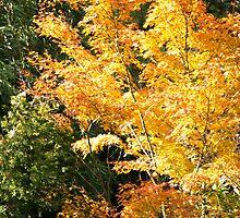 Autumn Orange by Jeanne Peters