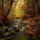 Then Came Fall by Charles & Patricia   Harkins ~ Picture Oregon
