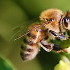 Camden is the place to Bee. by Greg Little